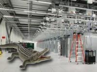 Natur pur im Google-Rechenzentrum: Alligator nistet sich in Teich ein