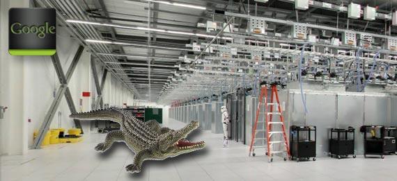 natur pur im google rechenzentrum alligator nistet sich. Black Bedroom Furniture Sets. Home Design Ideas