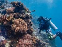 World Oceans Day: Abtauchen mit Google Street View